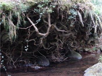 Изучение изолированных кончиков корней